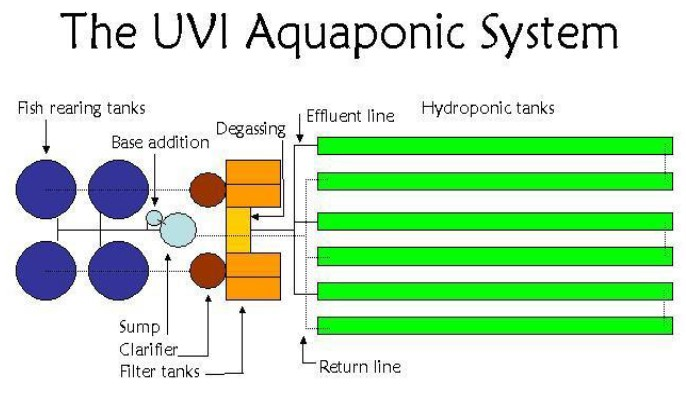 Aquaponics as a Valuable Addition to Cuba's Organoponic